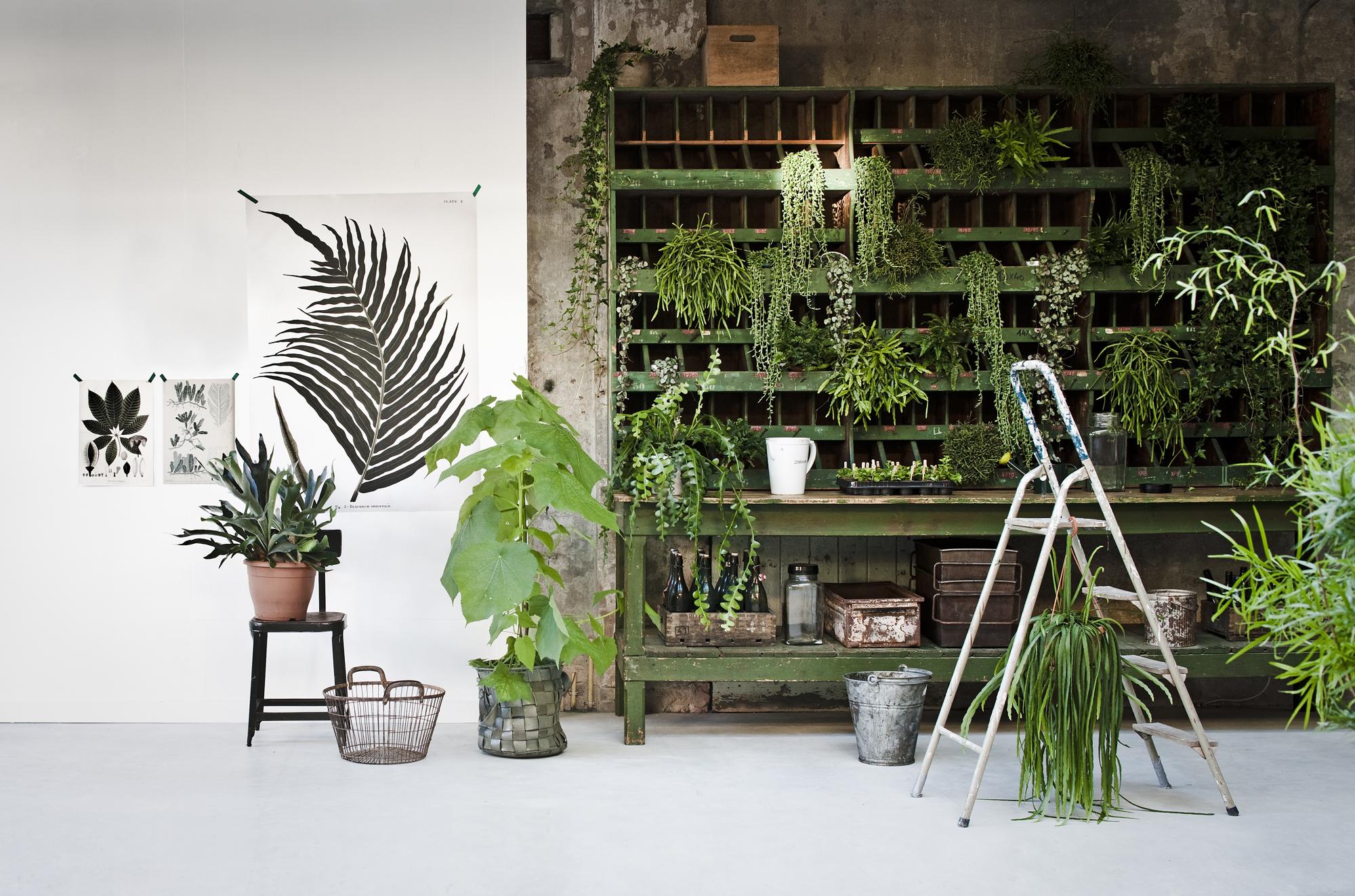 photographe Jeroen van der Spek mur vegetal