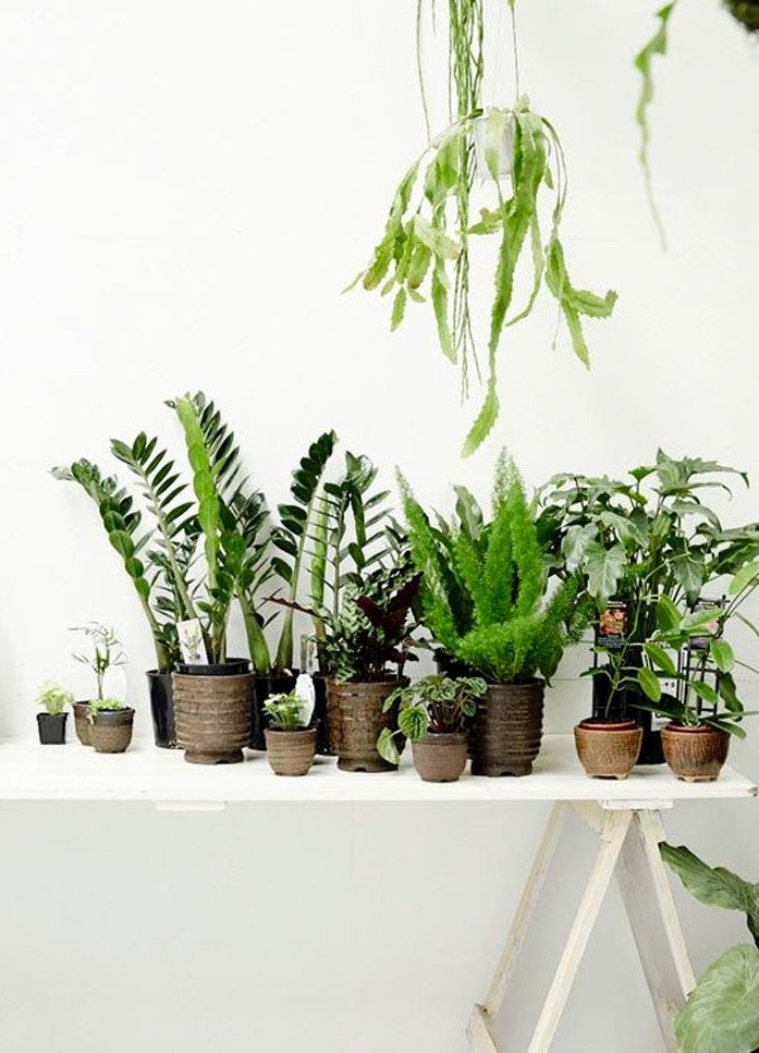 urban jungle par chiara stella home10
