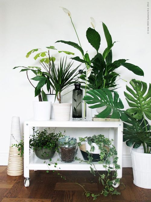 urban jungle par chiara stella home12