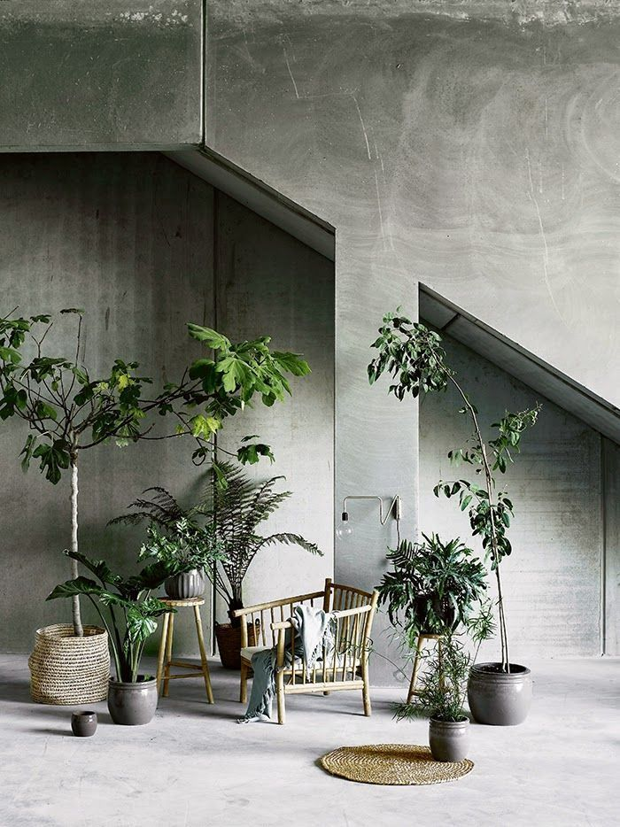 urban jungle par chiara stella home6