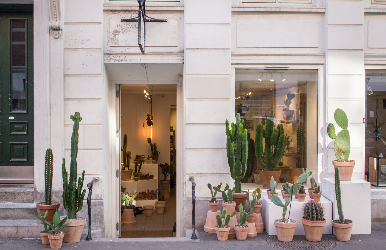 kaktus store, cactus shop by chiara stella home