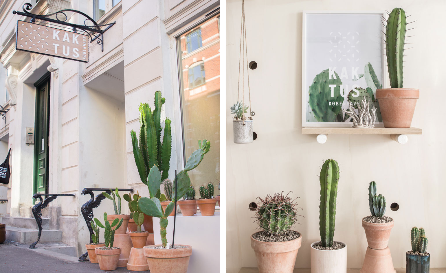 kaktus store, cactus shop by chiara stella home2