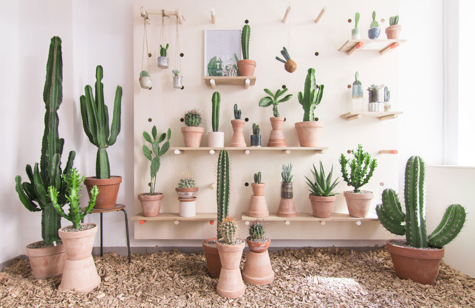 kaktus store, cactus shop by chiara stella home3