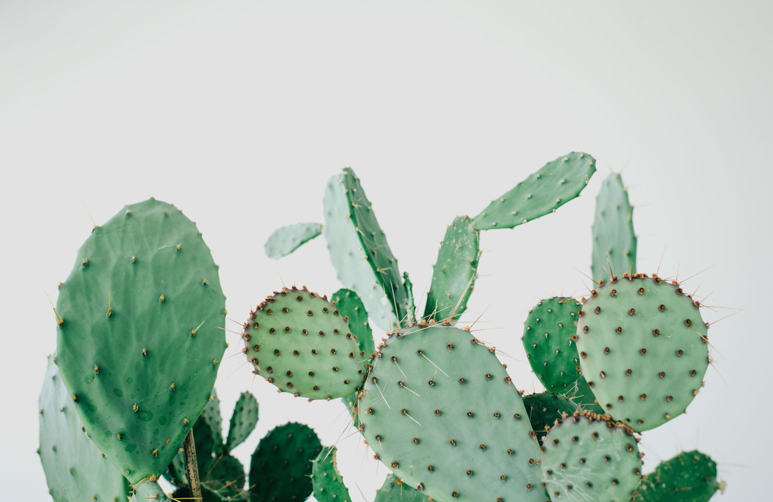 kaktus store, cactus shop by chiara stella home4