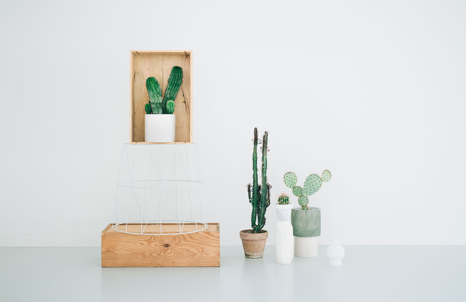 kaktus store, cactus shop by chiara stella home7