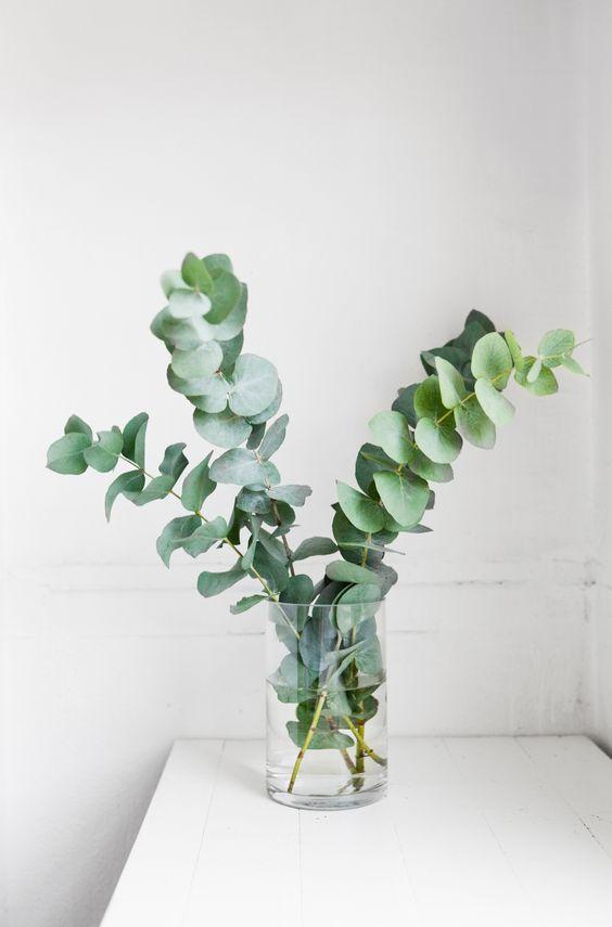 decorer-avec-eucalyptus-by-chiara-stella-home